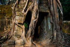 Ta Som.Trees with roots on the walls.Angkor.Cambodia. Stock Photography