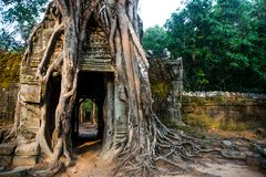 Ta Som.Trees with roots on the walls.Angkor.Cambodia. Royalty Free Stock Image