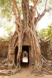 Ta-Somtempel i Angkor Cambodja Royaltyfri Foto