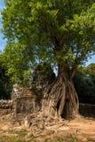 Ta-Somtempel i det Angkor Wat komplexet, Cambodja, Asien arkivfoto
