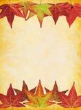 tła spadek liść Obraz Royalty Free