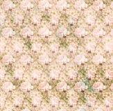 tła szyka menchii róży podławy tekstury rocznik Obraz Royalty Free