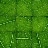 tła zielenieją set Obrazy Royalty Free