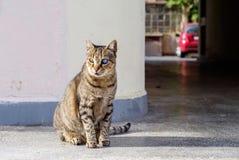 Taai kattenportret stock foto's