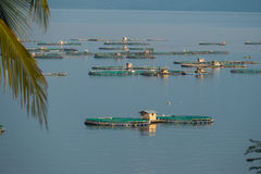 Taal湖的渔场 库存图片