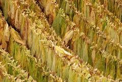 Tabacco 06 Fotografie Stock Libere da Diritti