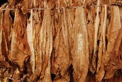 Tabacco 10 Immagini Stock