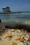 Tabacco Caye Fotografie Stock