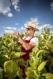 Tabacco dell'agricoltore Immagini Stock Libere da Diritti