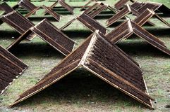 Tabaco de Srintil de Temanggung Indonesia que se seca en el sol fotografía de archivo libre de regalías