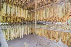 Tabaco que cura graneros Foto de archivo libre de regalías