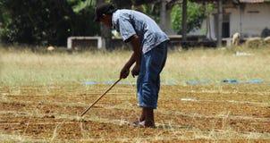 Tabaczni rolnicy podrzucali przez tytoniu Zdjęcia Stock