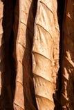 Tabaczni suszarniczy liść Fotografia Stock
