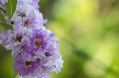 Tabaek é grupos bonitos de flores cor-de-rosa Fotos de Stock