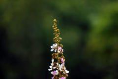 Tabaek de fleur Photographie stock