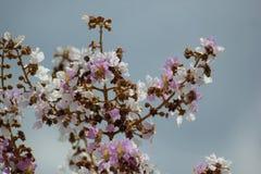 Tabaek de fleur Photo stock