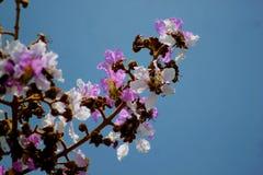 Tabaek del flor Fotografía de archivo