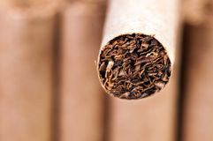 Tabak in den Zigaretten lizenzfreie stockbilder