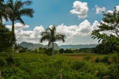 Tabaksgebieden in Vinales, Cuba Royalty-vrije Stock Afbeeldingen