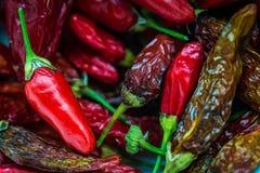 Tabasco Chili w pucharze zdjęcie royalty free