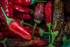 Tabasco Chili w pucharze fotografia stock