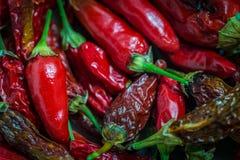 Tabasco Chili w pucharze obrazy royalty free