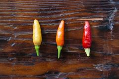 Tabasco Pepper Hot Pepper in Three Colors royalty free stock images