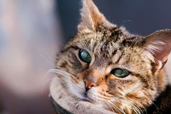 Tabbby cat gazing at camera laying against flowerpot. Basking in sunshine Royalty Free Stock Images