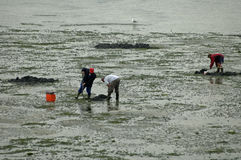 Tabbing piers on mudflat used for fishing Royalty Free Stock Photography