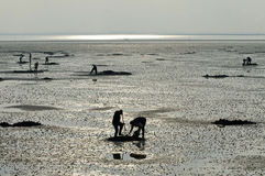 Tabbing piers on mudflat used for fishing Stock Images