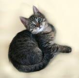 Tabby и белый котенок лежа на желтом цвете Стоковая Фотография