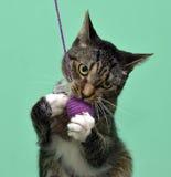 tabby кота шаловливый Стоковые Изображения RF