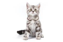tabby котенка стоковые фото
