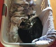Tabby кладя в корзину одежд Стоковые Фото