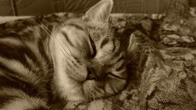 Tabby спать стоковое фото rf