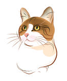 tabby портрета имбиря кота Стоковая Фотография RF
