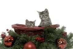 tabby 2 котят праздника корзины Стоковая Фотография