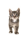Tabby baby cat looking up Royalty Free Stock Images