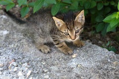 Tabby Baby Stock Images