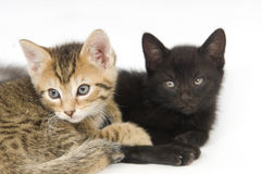 Tabby and black kitten Royalty Free Stock Photos