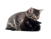 Tabby and black kitten sleeping Royalty Free Stock Image