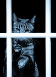 Tabby Blues Stock Images