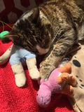 Tabby Boy Cat com Teddy Bear Fotografia de Stock Royalty Free