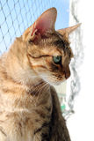 Tabby brown cat. In sunshine royalty free stock photos