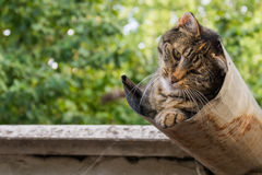 Tabby calm cat resting on the shiver roof.  Stock Images