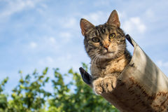 Tabby calm cat resting on the shiver roof.  Stock Photos