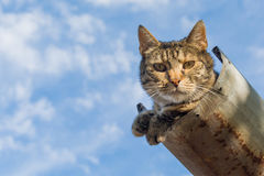 Tabby calm cat resting on the shiver roof.  Royalty Free Stock Photos
