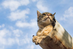 Tabby calm cat resting on the shiver roof.  Stock Photography