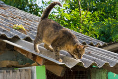 Tabby calm cat on the shiver roof.  Stock Photo