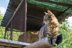 Tabby calm cat sitting on the shiver roof.  Stock Images